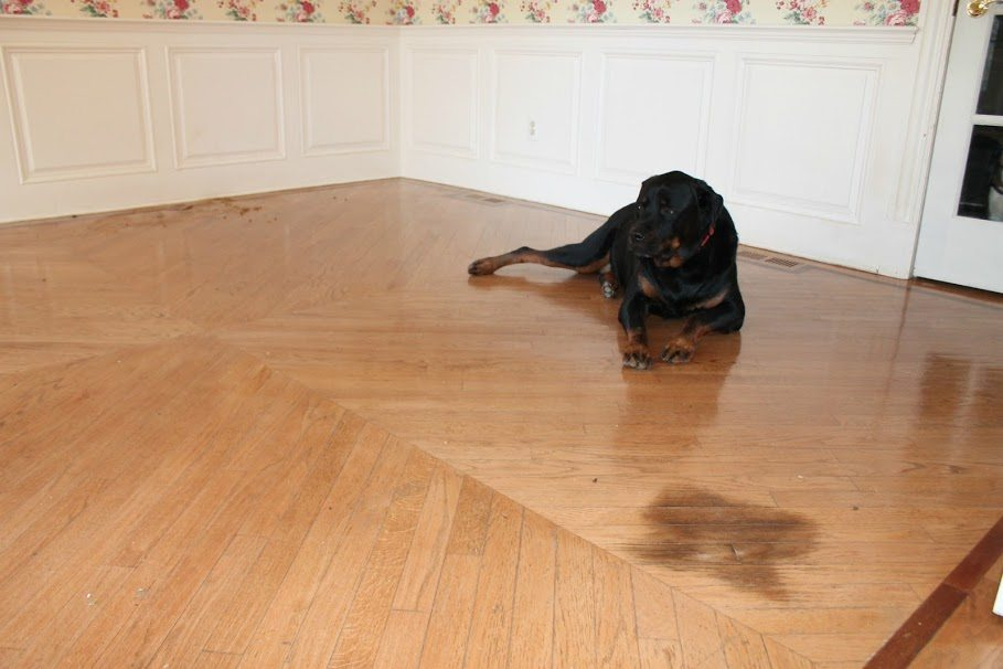 Pet Urine Kitchen Floor