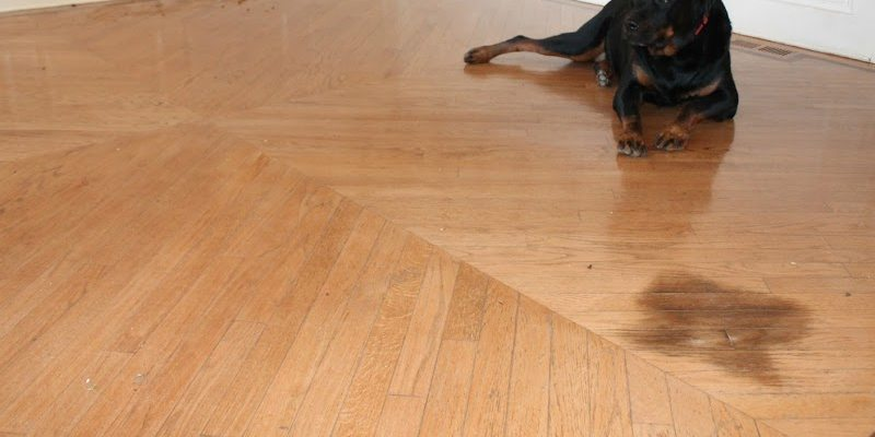 Remove A Pet Stain From Hardwood Floors Monk 39 S Home