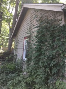Ivy-Covered Garage