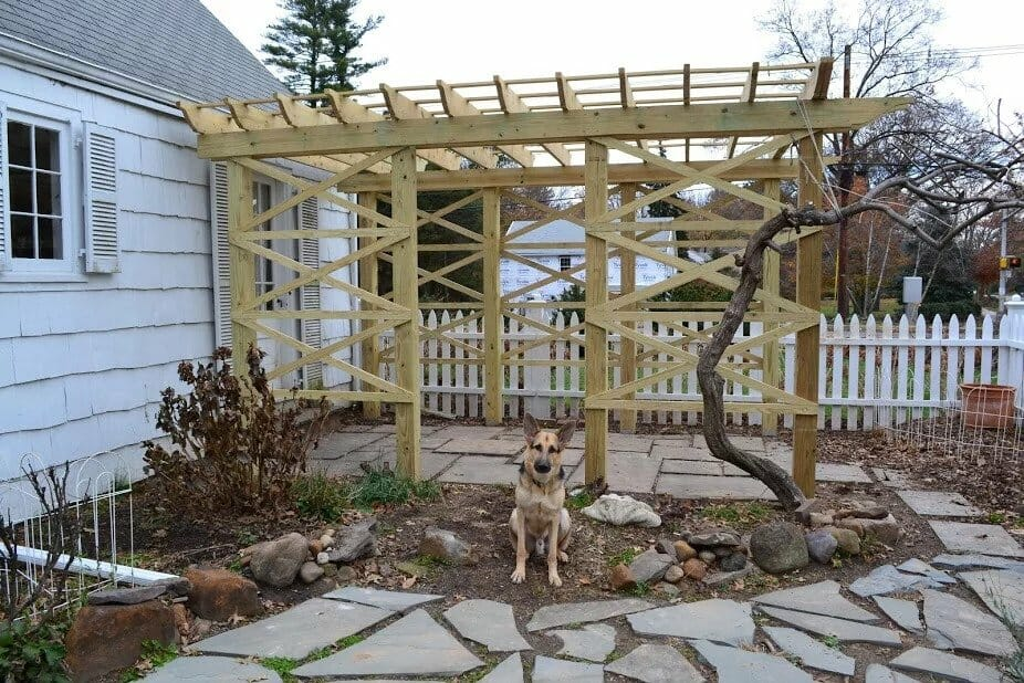 Doggo guarding the pergola